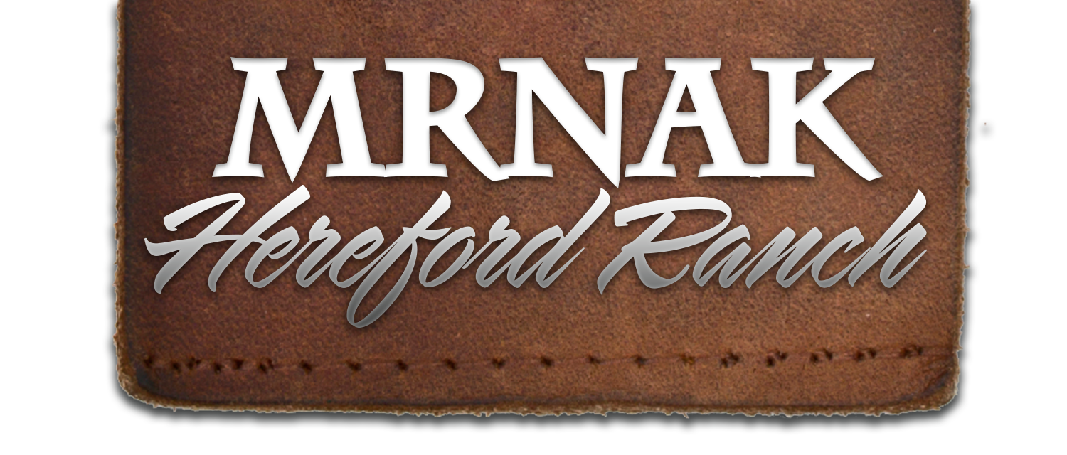 Quality Hereford Cattle | Bowman, ND